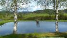 See am Runenhof im Bayersichen Wald